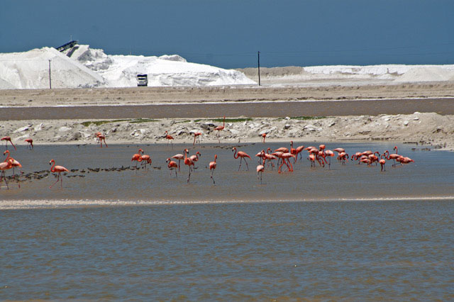 picutre of flamingos
